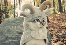 """Where The Wild Things Are / I love animals and these pics are specifically ones that made me AHHHHHHHHhhhhhhhhhhh or do the """"OH MY WORD"""" face or *sniff*"""