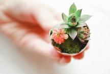 Green & Plant / サボテン、多肉植物、苔が気になっています。