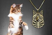 Maine Coon cat / by SiberianArt by Amit Eshel