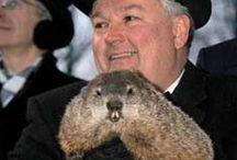 Groundhog Day Galore