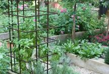 gardening / All kinds of great gardening tips and tricks. Ideas for all seasons of gardening and indoor gardening tips