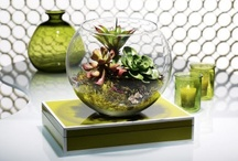 'Little' Obsessions are OK / Succulents, terrariums, indoor gardening and other decorative planting ideas. / by Debora - Nails By Deb