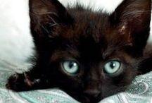 CATSCATSCATS / by Loretta Cedrone
