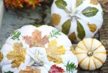 Fall & Winter Inspiration / The air is brisk, the leaves are turning, and soon winter will be coming. Get inspired with Fall and Winter recipes, party ideas, and decor.