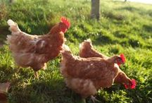 OUTDOORS / Outdoor living areas, chickens, gardening, camping, etc. / by Taylor Grant