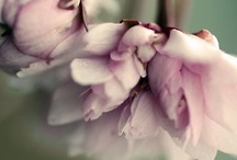 Les fleurs / by Nina