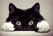 Kitty Kitty Cats... / by Nina