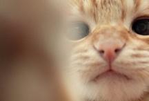 Here kitty kitty / by Heidi Jayne