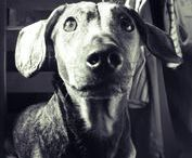 must  love  dogs / great photos of most amazing creatures