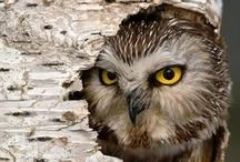 Owls / by Melanie Scouten