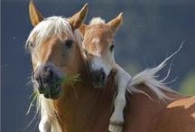 "Horses Are Beautiful / ""In riding a horse, we borrow freedom."" ~ Helen Thompson  / by Eva S."
