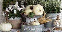 Pumpkins, Halloween & Autumn / Wonderful ideas