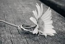 Mariage | Pour les alliances