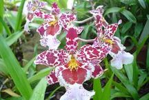 Orchids / I love orchids