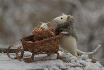 Mice / mice