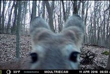 Devil's Lake Critter Cams / We, along with the Devil's Lake State Park nature center, have set up a variety of trap cameras around the park.. here are some of the results..