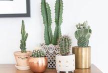 Plants / Cute cacti's :)