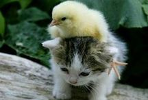 "Adorable Stuffs ❤ / Cute photos and motivational stories to make you go ""awww"""