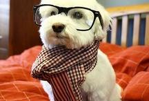 Doggies!! / by 1Happychickadee