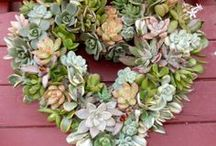 Succulent Crazy / I love  Succulents - this is Everything Succulents