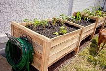 Gardening / by Ginger