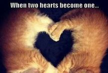 LOVE ♥ HEART / Love is Where the Heart is.