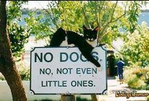 Those Lovable Pets / by Mary Ricciuto