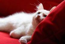 Victoria's animals / .•*¨`*•✿ ✿•*¨`*•.•*¨`*•✿ ✿•*¨`*•.•*¨`*•✿ ✿•*¨`*•
