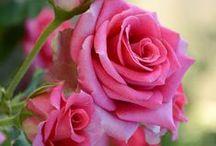 Victoria's Flowers / இܓஇܓஇܓ இܓஇܓஇܓ இܓ