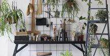 Plants Ideas / Plants
