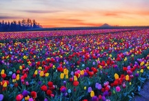 i LuV fLoWerS. / flowers / by cRystal cEbryk-KNeller. `kIZZ.