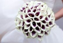 Wedding Dresses/Wedding Ideas / by Jean Marie Dreyer