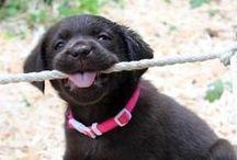 Cute little pets!  / by Sarah Hanson