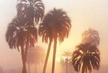 california / by atara