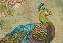 peacocks / by atara