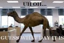 Uh oh....Guess what day it is?!?! / by Ashley Schaffer