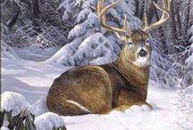 Art - Wildlife - Deer / Beautiful paintings and drawings of deer. Whitetail deer, mule deer, elk, moose, caribou and more!