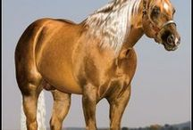 Horses - Goldens / Palominos and other golden colored horses