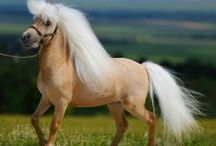 Horses - Little People / Ponies and miniature horses