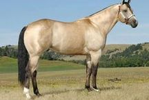 Horses - Cream / Buckskins, duns, and other creamy colors - It's about appearance, not genetics. If it looks cream colored, it goes here, regardless of the technical genetic categorization. :)