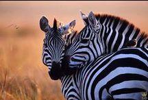 Photos - Wildlife - Misc