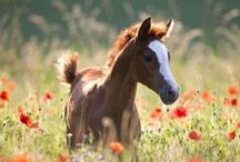 Horses - Foals / All the cute colts and fillies of the world!