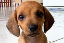 Cachorros / Cachorros fofos. Amo cachorros!