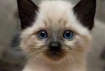Gatinhos / Ame gatos. Seja feliz.Gatos gostam de você.