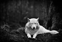 Animalia / by Sofia Collado