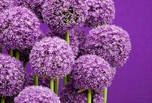 Crazy 4 PURPLE!! / by Donna ~~~
