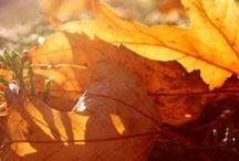 Falltime / by Donna ~~~