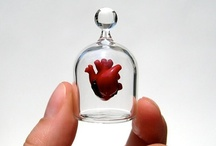Have Heart / the anatomical heart is one of the most beautiful things in the world / by Anne Trominski