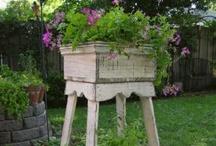 Gardening and Plants / by Felecia Johnson Ozant