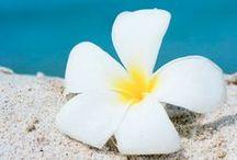 "Pua (""Flowers"" in Hawaiian)"